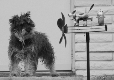 Dog_and_dog_windmill_2_copy_1